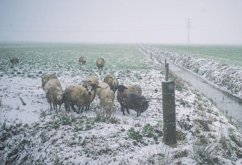 Sneeuw Weiland.jpg