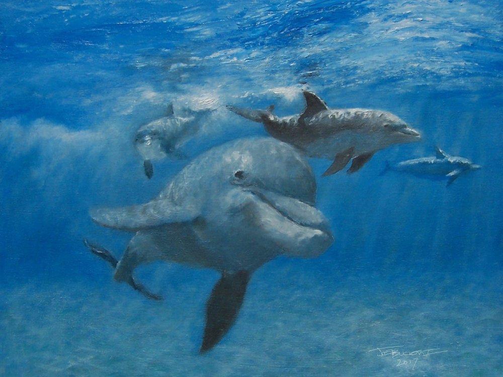 dolphins (4).jpg