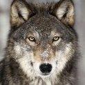 -CSM-Michal-Wolf