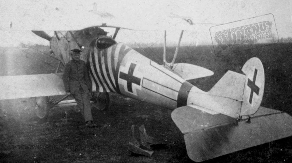 Pfalz D.IIIa Marine Feld Jasta (Greg Van Wyngarden).jpg