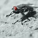 Zooropa_Fly