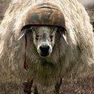 Sheepy_ZA