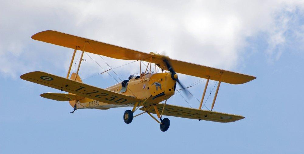 Yellow_Tiger_Moth_Góraszka.jpg