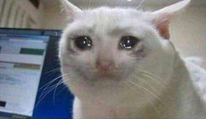 crying-cat.jpg.25af2c5690eb2feeb4eedc9f488def9a.jpg