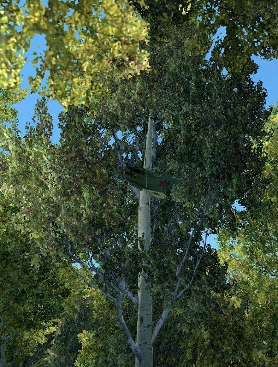 i16tree.thumb.jpg.ca192cb0f7d30dfc9c0ca857a9355777.jpg