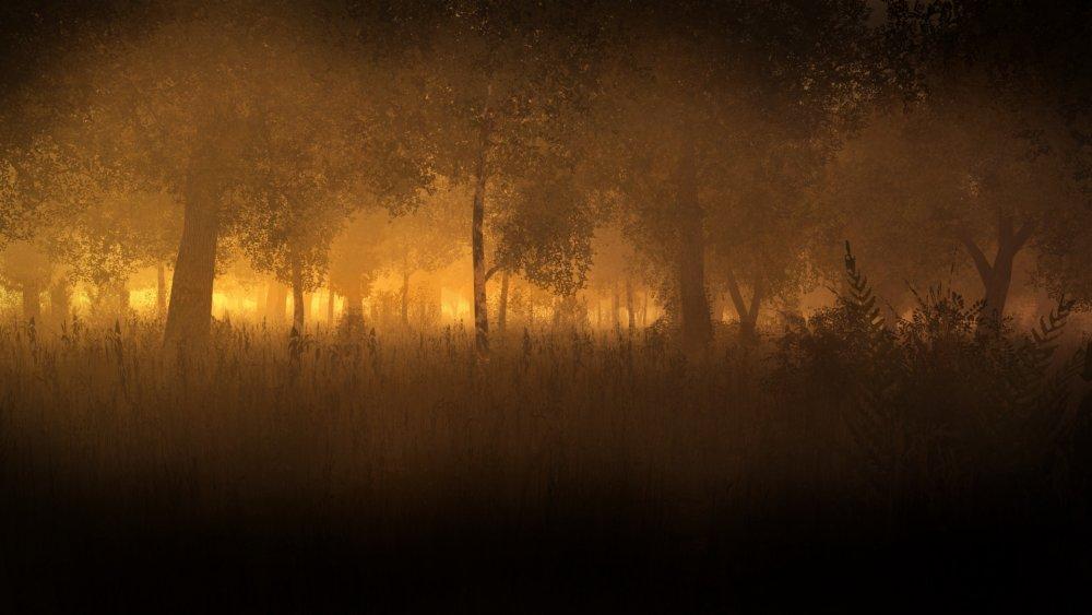 sunrise in the woods.jpg