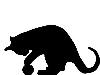 [E.C.]Catball1985