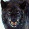 1./KG4_Blackwolf